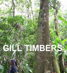 Gmelina Logs in India