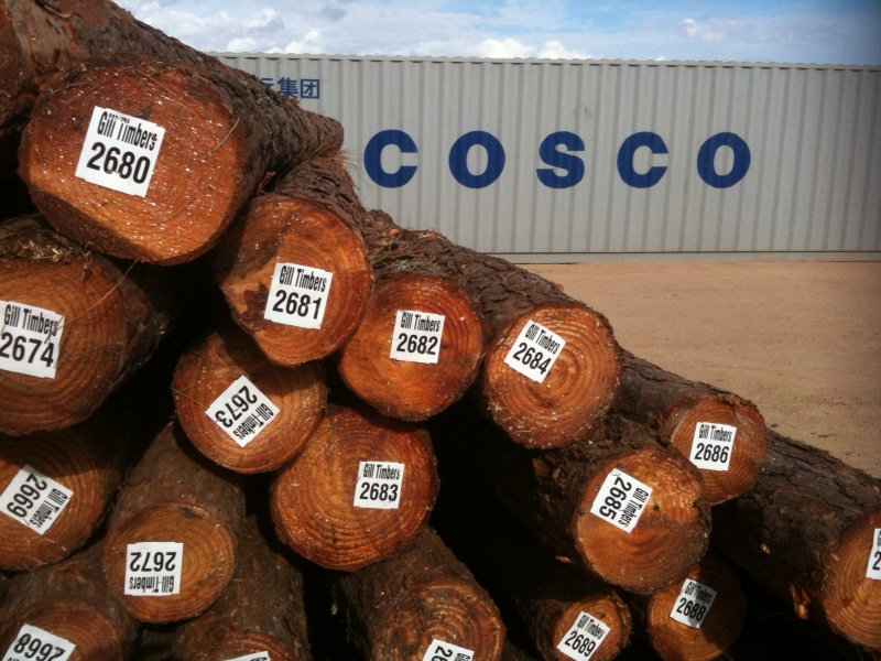 Pine Logs From S. America