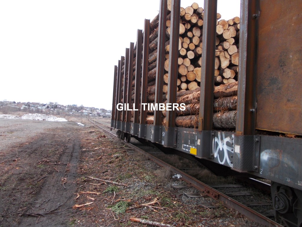 pinewood-logs