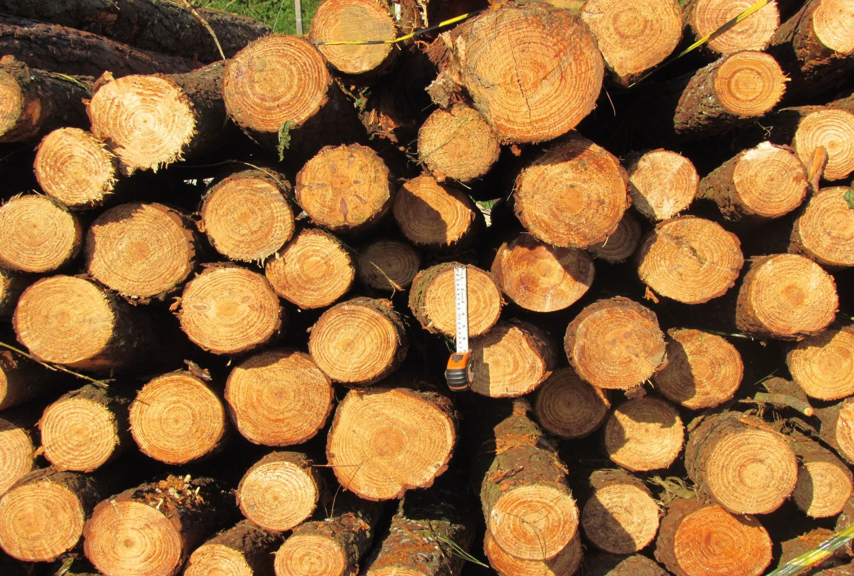 Pine Logs S. America