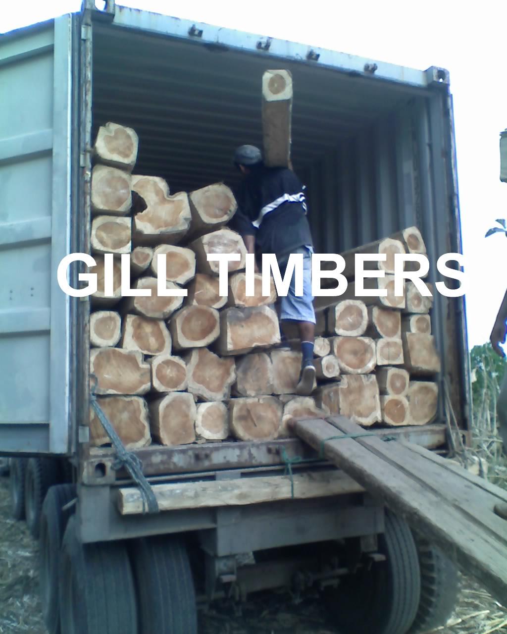 Teak Logs from Ecuador
