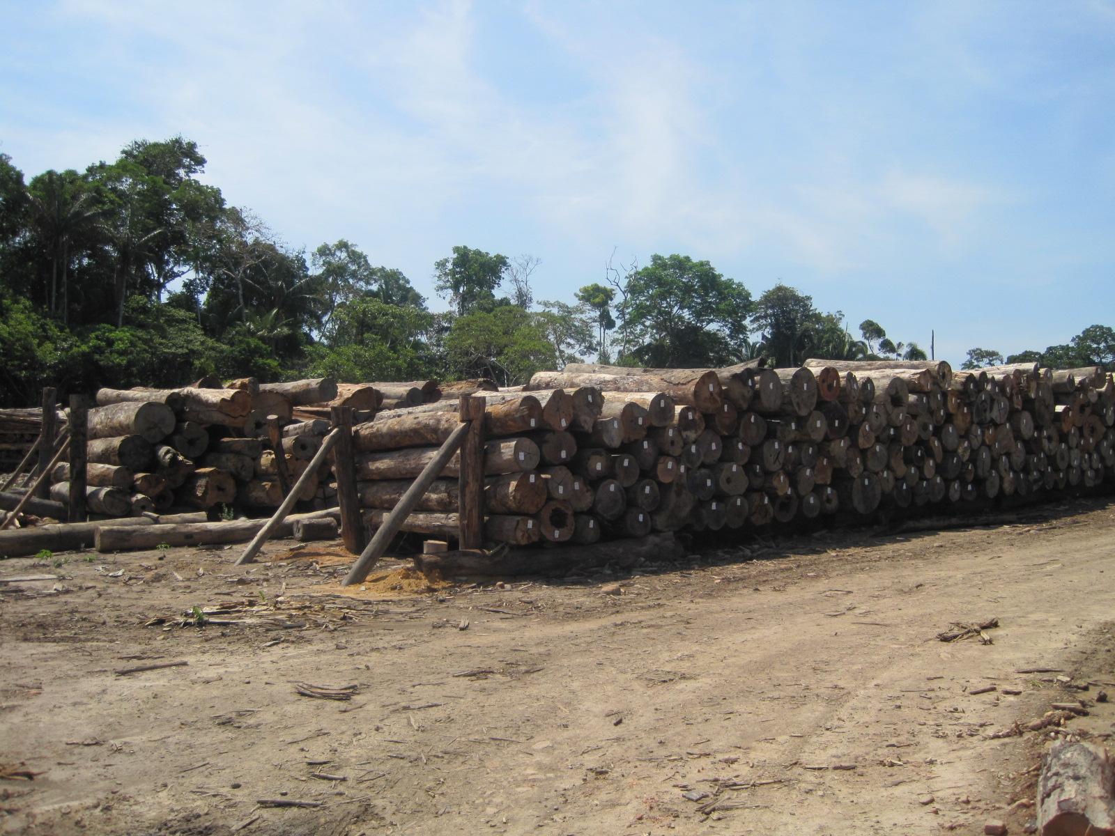 brazil-woods2