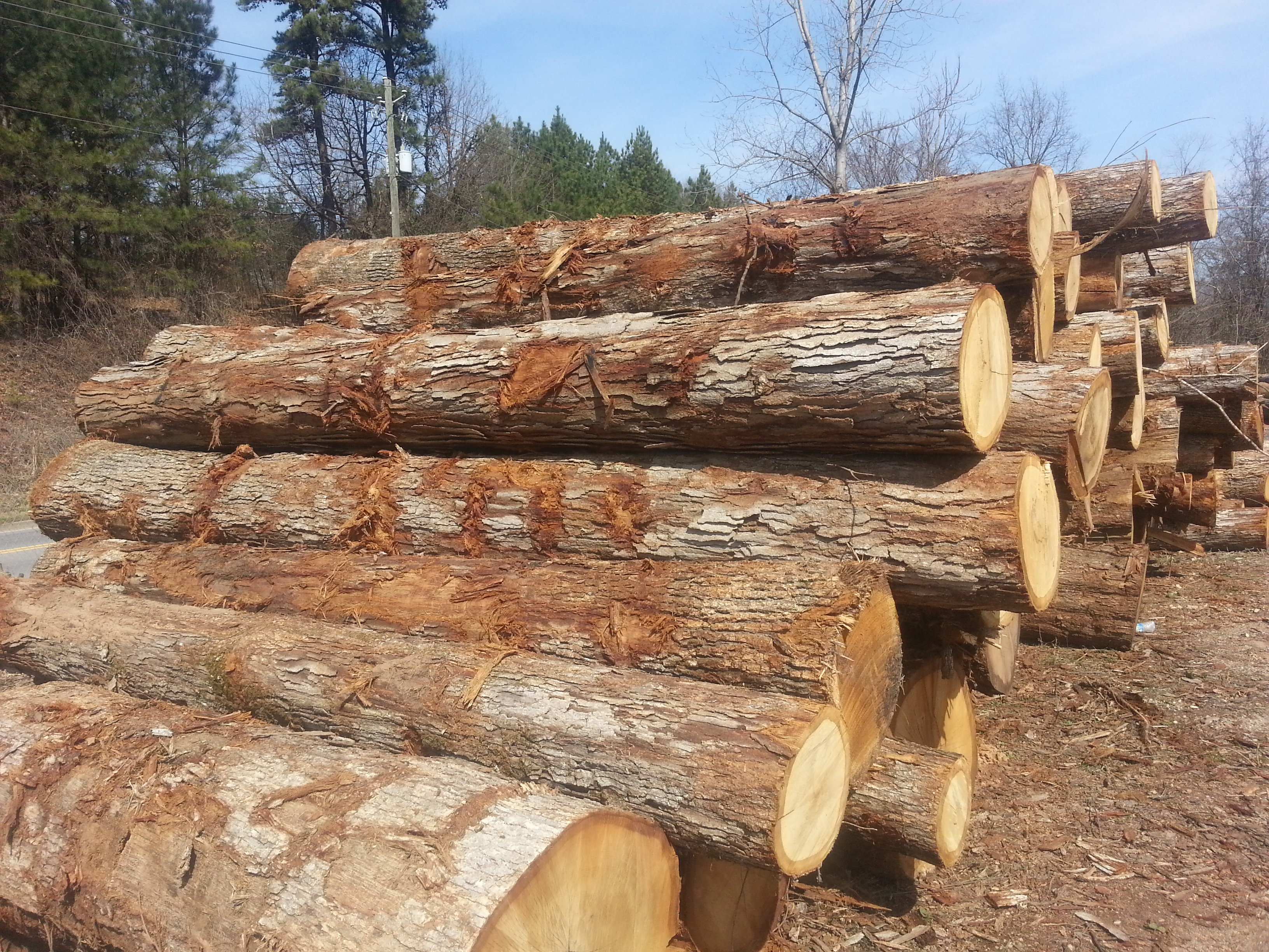Red Oak Logs-India, China