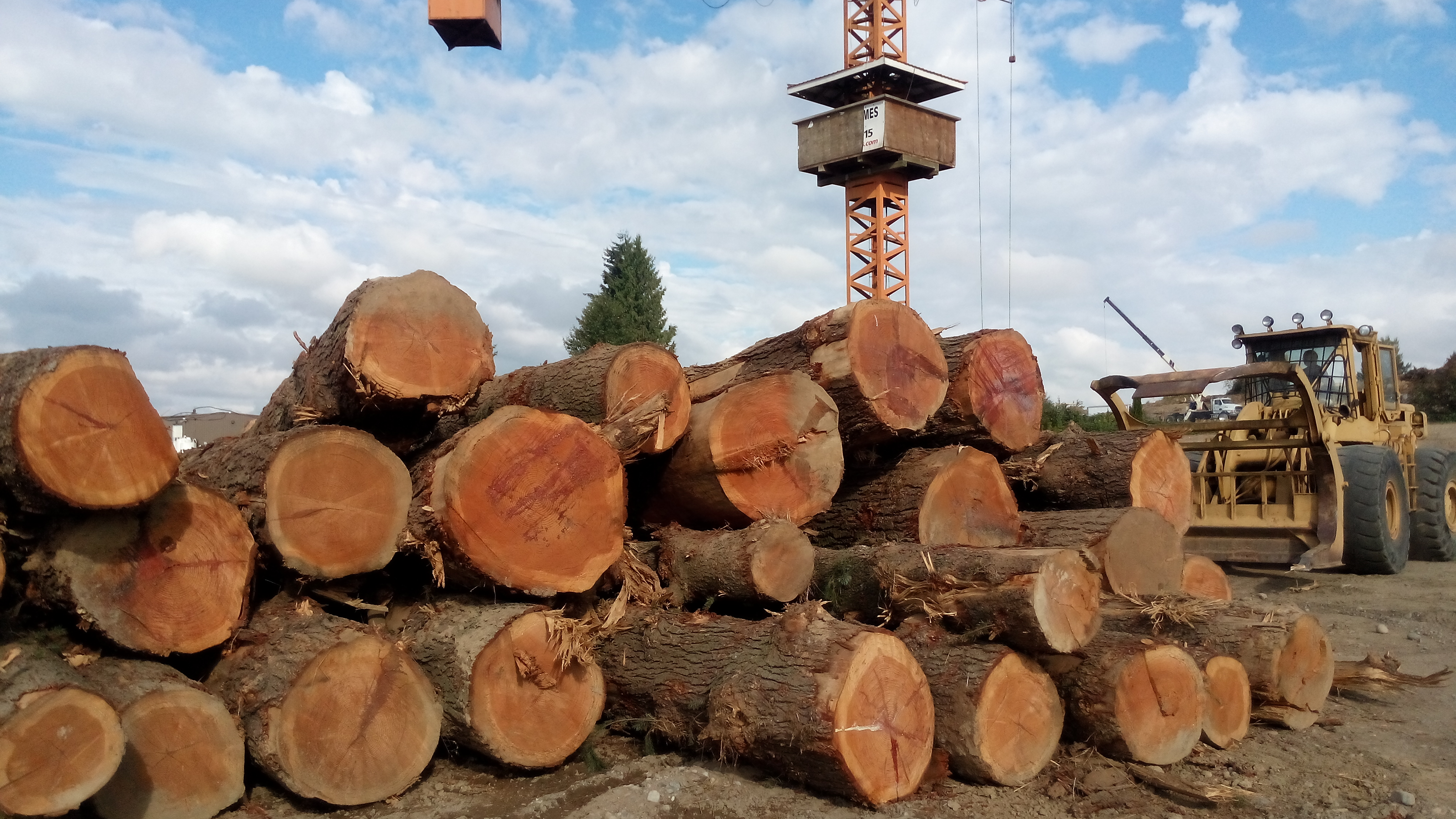DOUGLAS FIR LOGS FOR EXPORT