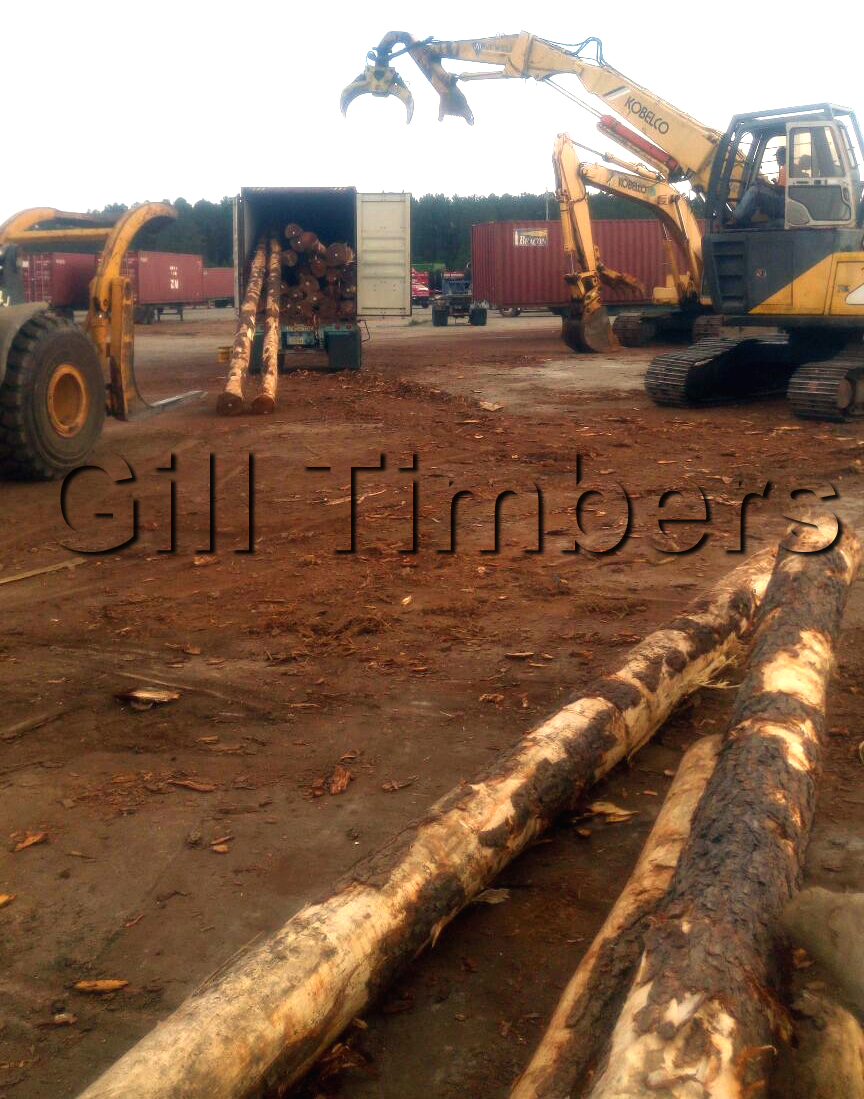 Syp Logs For Sale 20 Containers Timber And Lumber
